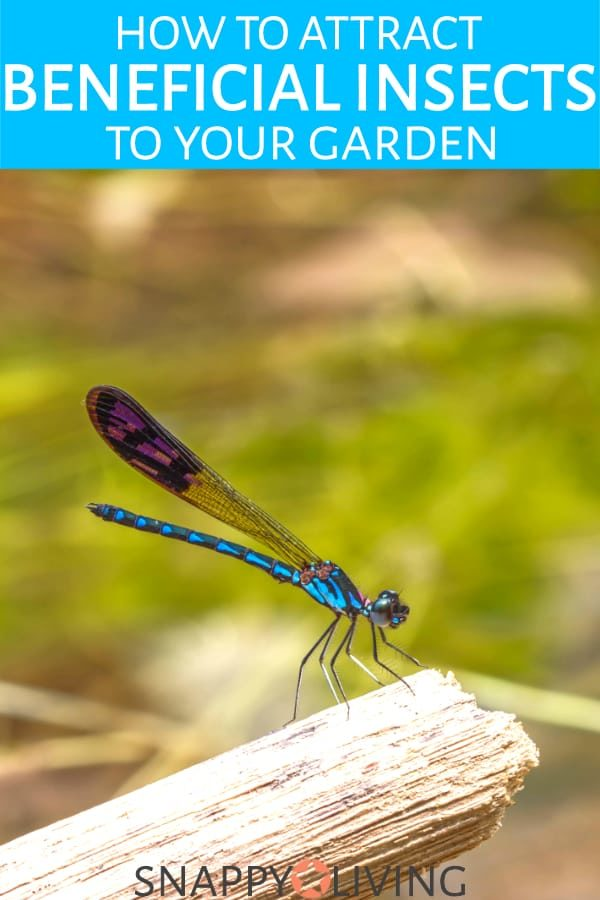 Beneficial Insects A Natural Pesticide For Your Garden Snappy