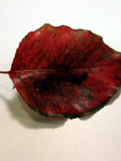 Waxed leaf on white surface