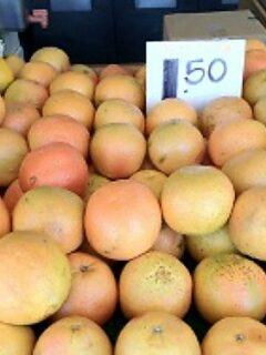 Grapefruits in grocery bin with price
