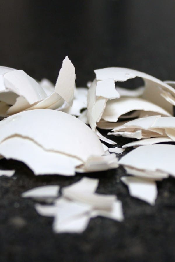 If you've got eggshells and you've got a garden, you've got a brilliant recycling program waiting to happen. You can use eggshells in gardening to enrich soil, and it's so easy. #eggshells #gardening #snappyliving #gardeningtips #gardeninghacks