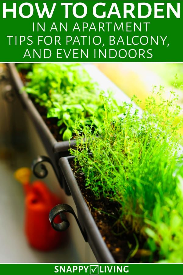 Herbs growing in window boxes in apartment balcony