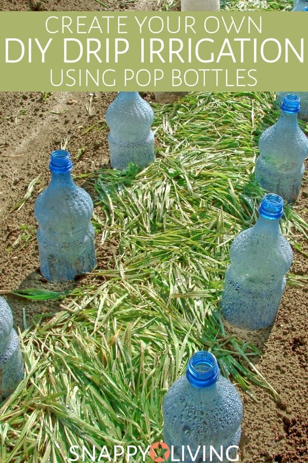 Diy Drip Irrigation Bottle For Gardens Snappy Living