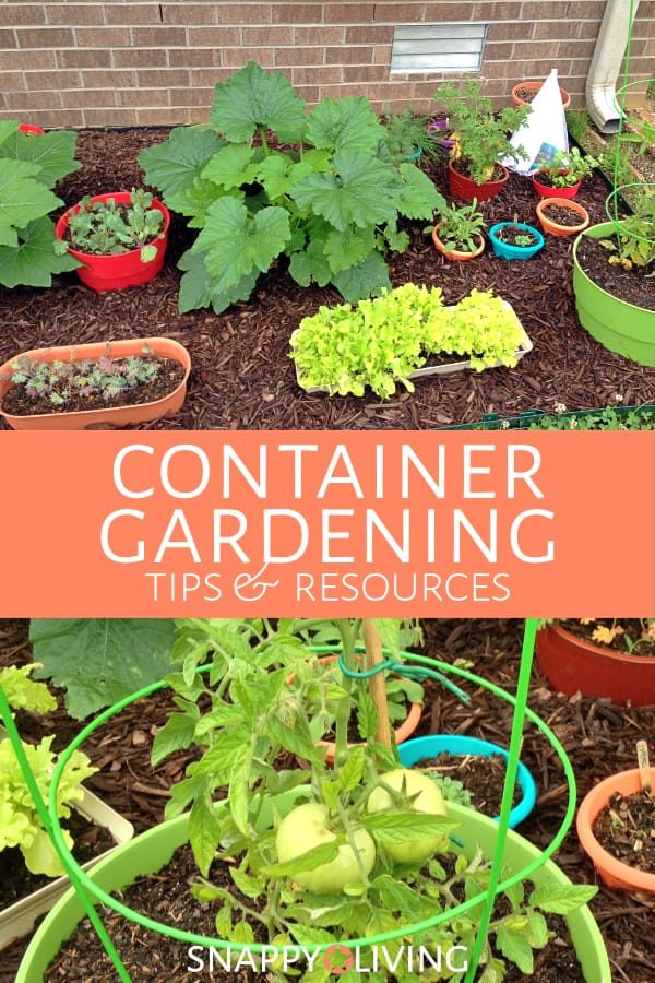 It only takes a small patch to start container gardening. Even a tinyyard,patio, or balcony provide room for several potted plants.You'd be surprised how much food you can grow in such a smallarea.