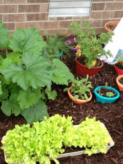 Vegetable plants growing in a container garden
