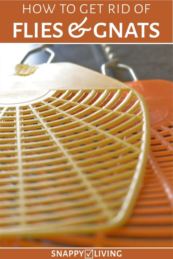 Fly swatters with text overlay - How to Get Rid of Flies & Gnats