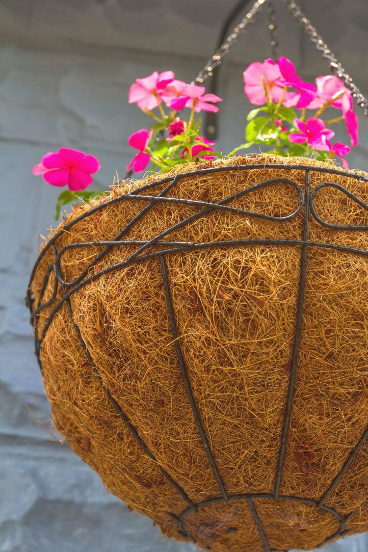 Planter lined with straw