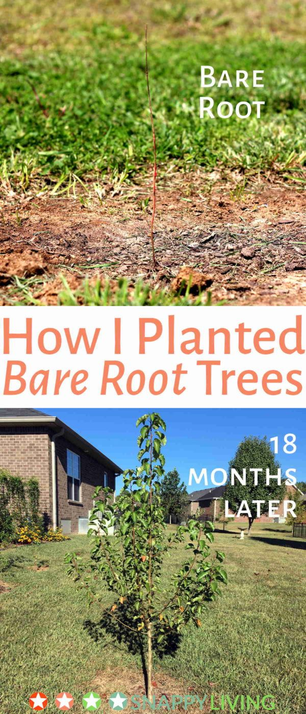 Learn how I planted 12 bare root trees I got from the Arbor Day Foundation. I'm no expert, but 10 of them survived, and 6 are over four feet tall now. This is a really cheap way to get some new landscaping going, and it's also great for the environment.