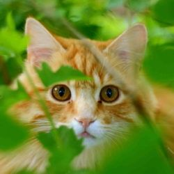 Cat peeking through leaves