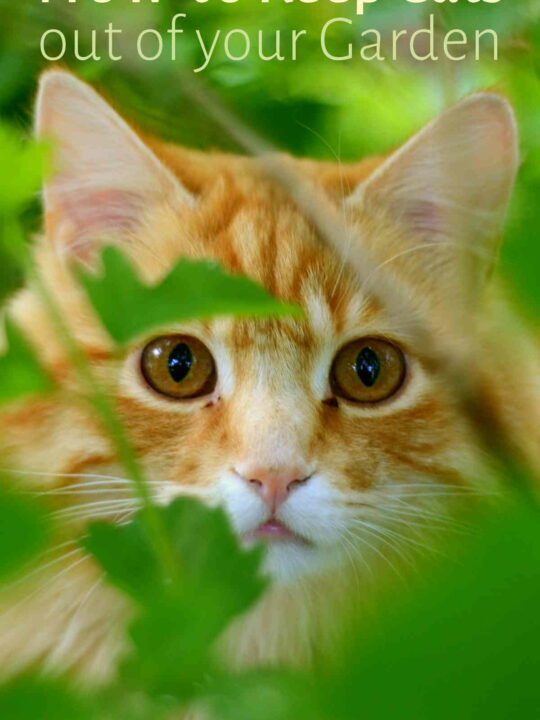 Cat peeking through leaves