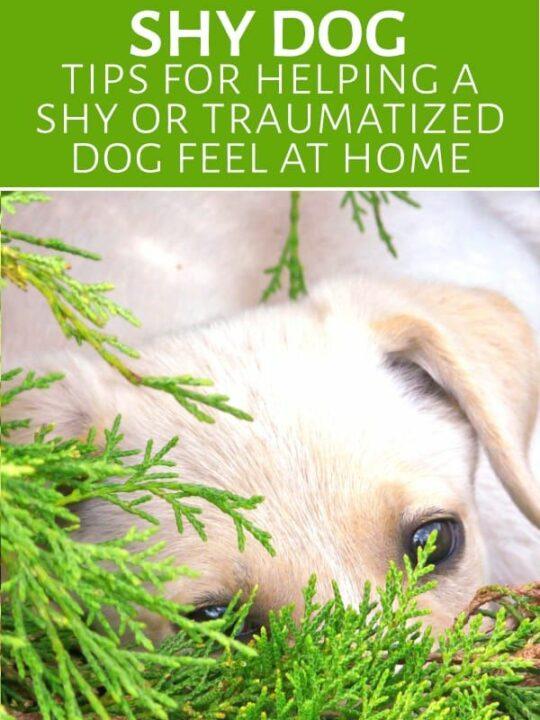 Shy dog hiding in foliage